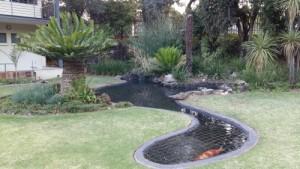 Tai chi next to the pond