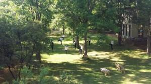Tai Chi retreat under the walnut trees