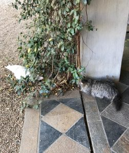 The cat stalking the disinterested chicken, at the tai chi retreat