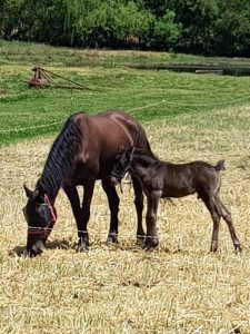Horse with foal, at the tai chi retreat